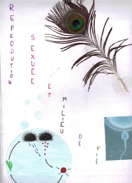 reproduction-sexuee-et-milieu-de-vie-13