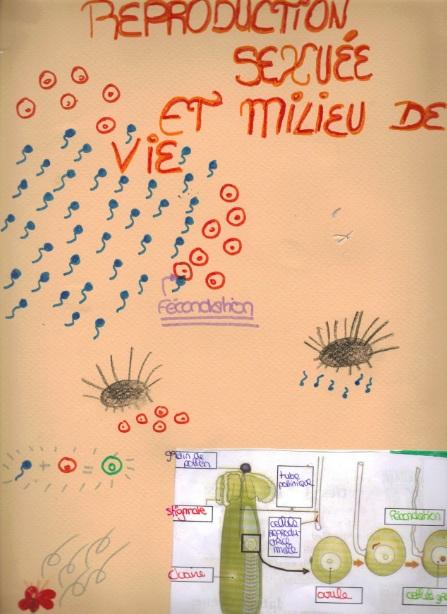 reproduction-sexuee-et-milieu-de-vie-15