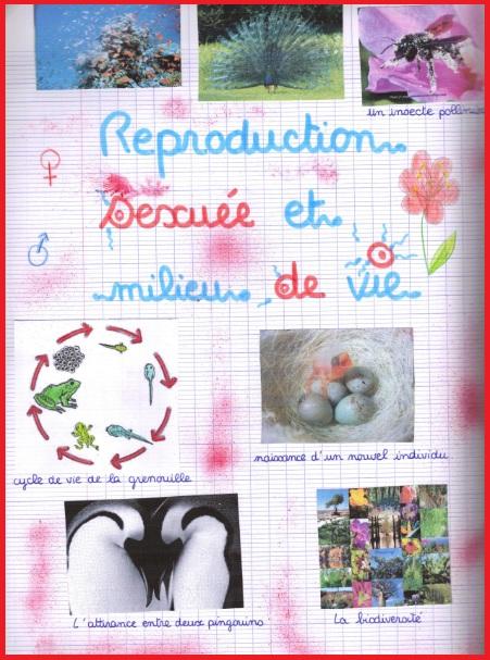 reproduction-sexuee-et-milieu-de-vie10