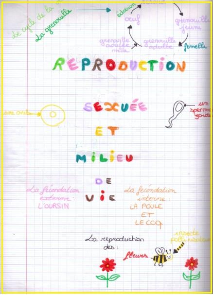 reproduction-sexuee-et-milieu-de-vie4