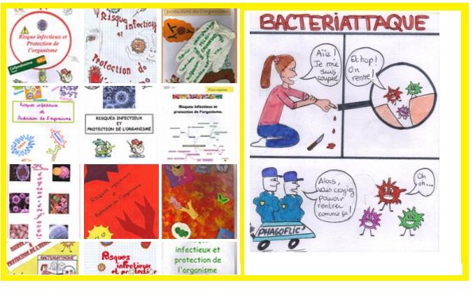 Le système immunitaire illustré par les 3èmes