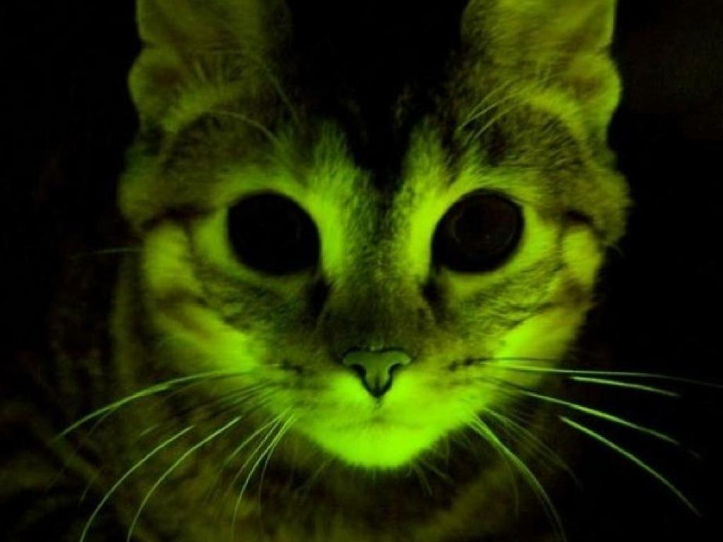 Des chats avec des poils fluorescents