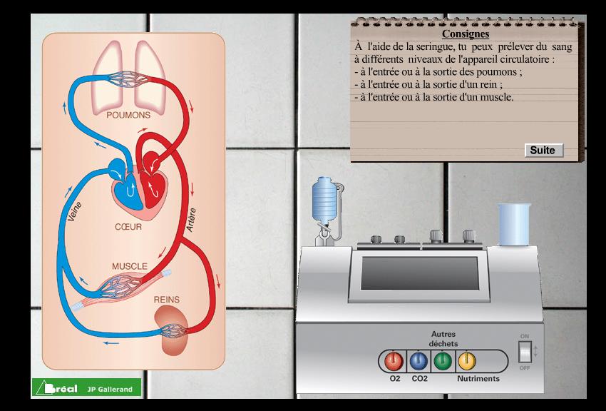 La circulation sanguine – Cours de SVT 5ème