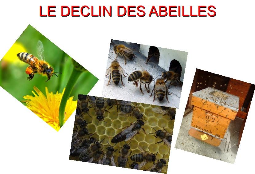 le déclin des abeilles svt