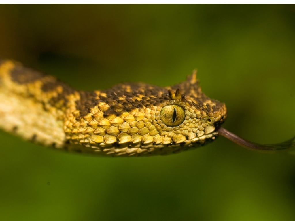 Nouvelle espèce de serpent découverte