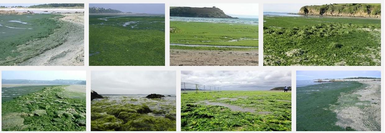 marée verte
