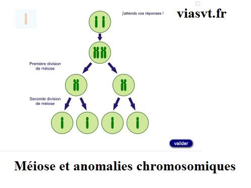 Méiose et anomalies chromosomiques SVT bac S terminale