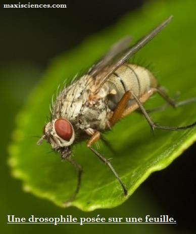 Le cerveau de la mouche s'adapte à la famine