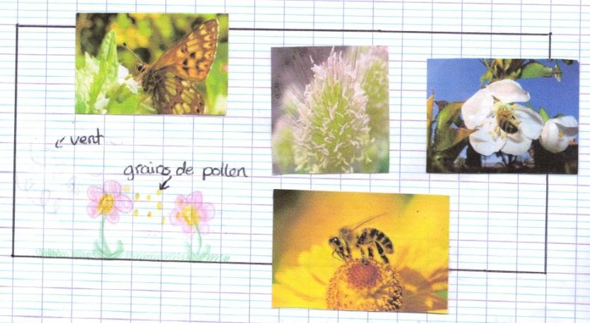 Le déclin des insectes pollinisateurs a des conséquences
