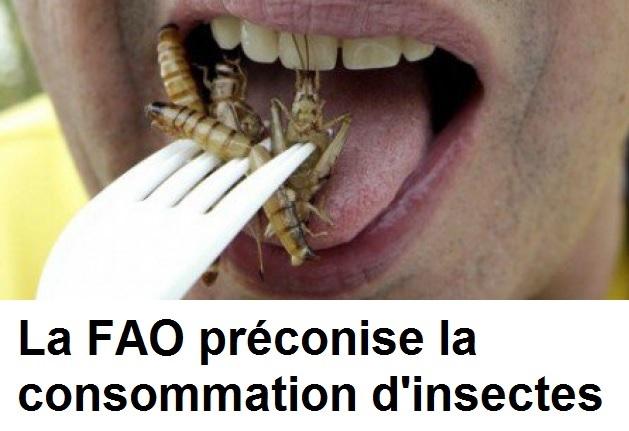 La FAO préconise la consommation d'insectes