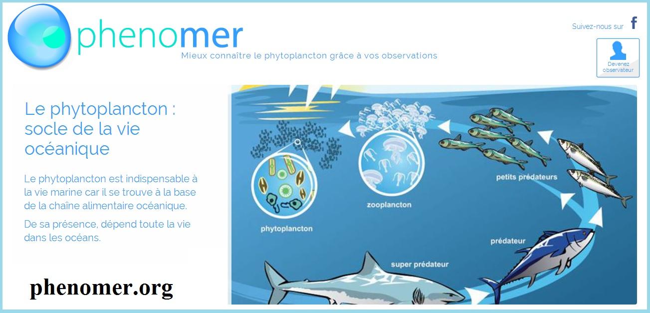 Mieux connaître le phytoplancton avec Phenomer