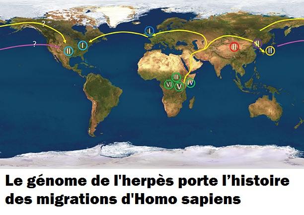 L'histoire humaine par l'herpès