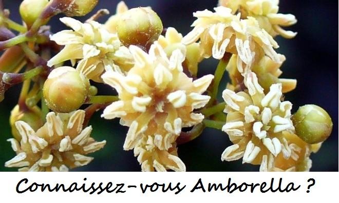 Connaissez-vous Amborella ?