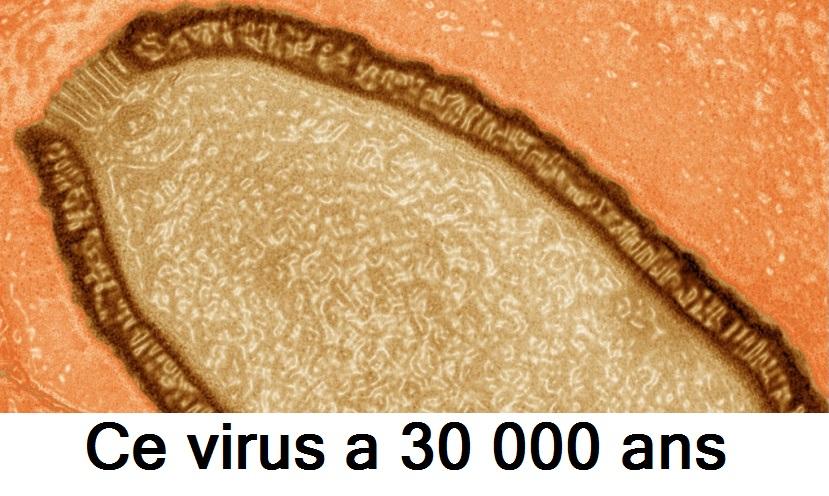 Ce virus a 30 000 ans