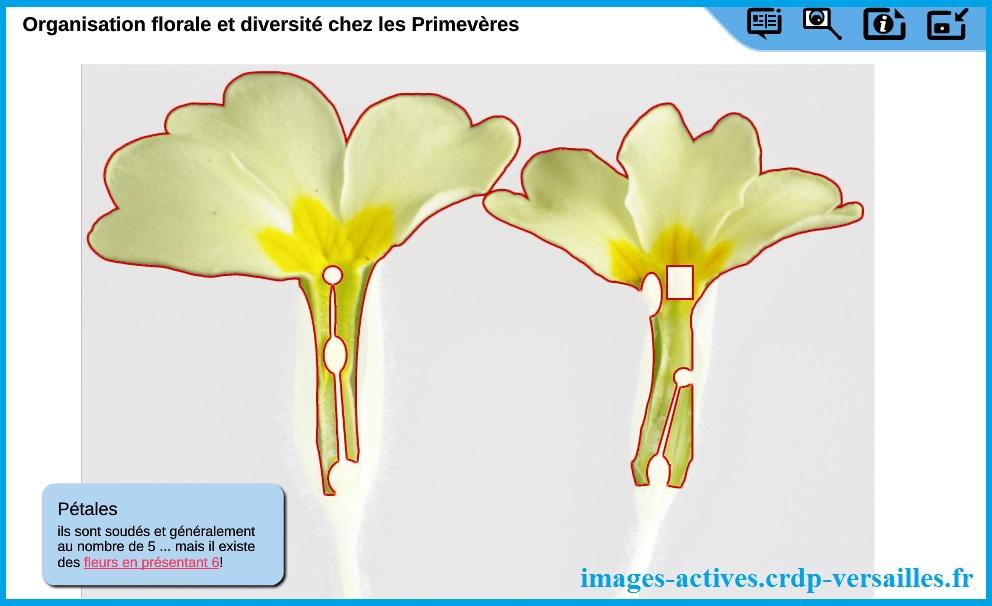 organisation-des-fleurs-Images-Actives