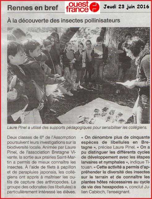 pollinisateurs collège Assomption Rennes Julien Cabioch Ouest France SVT