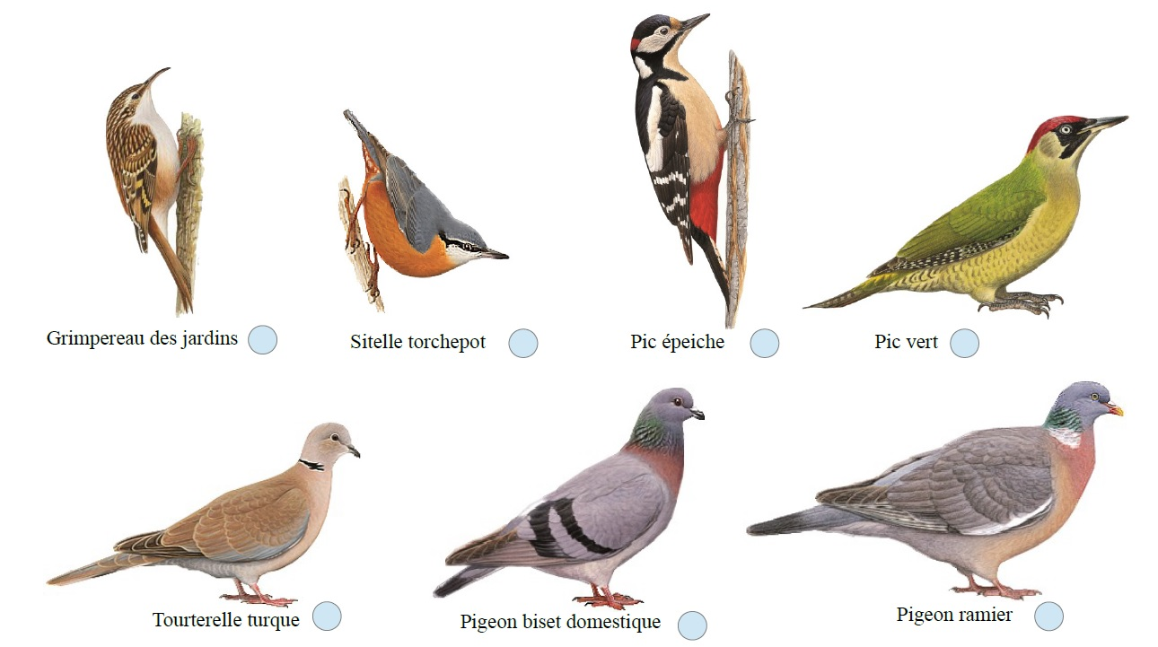 Oiseaux des villes et campagne avec la LPO