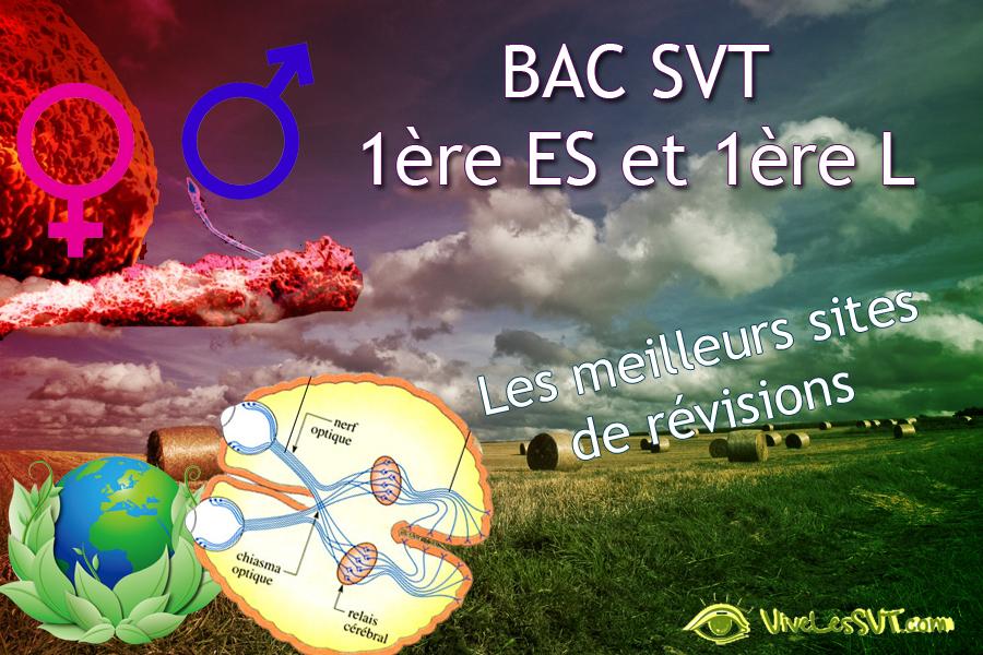 BAC SVT 1ères ES L : les sujets tombés en 2015