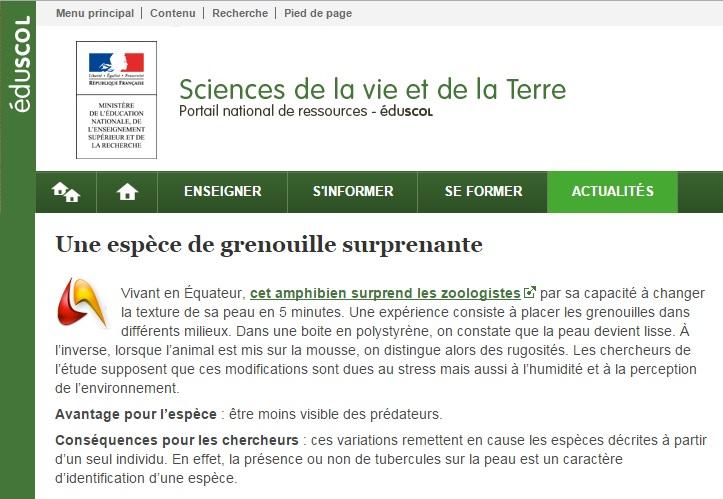 grenouille (2)
