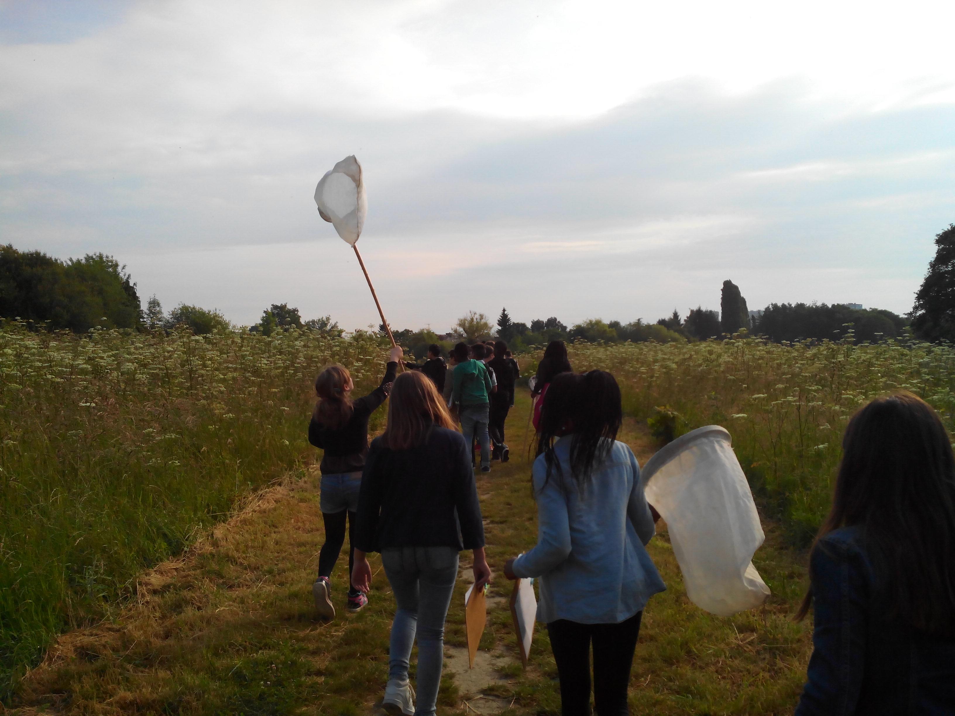 sortie pollinisateurs SVT 6eme