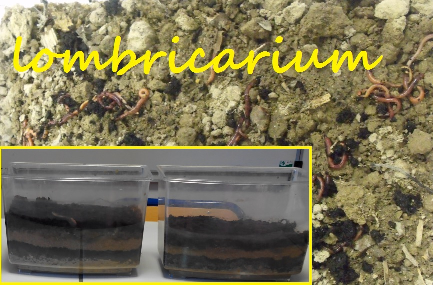 lombricarium