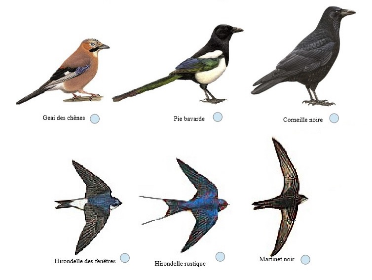 oiseaux LPO SVT