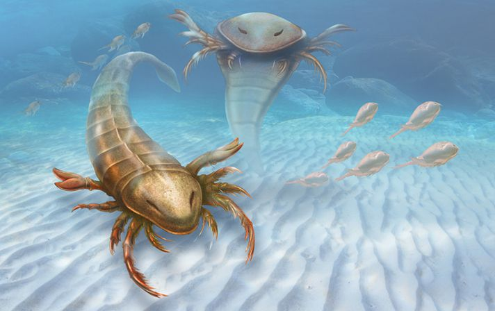 783208a312_Scorpion_De_Mer_Fossile_Yale_University