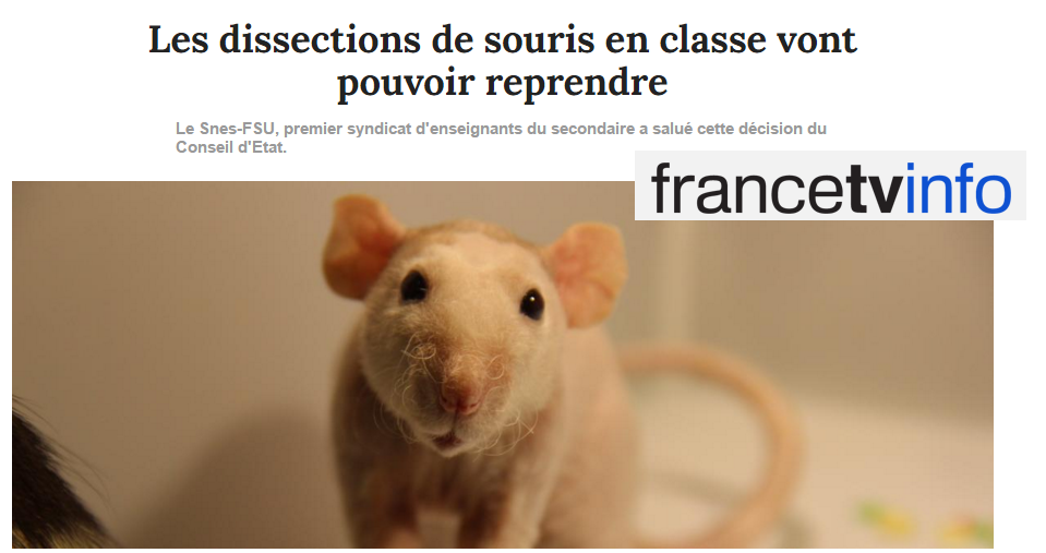 France TV Info dissection