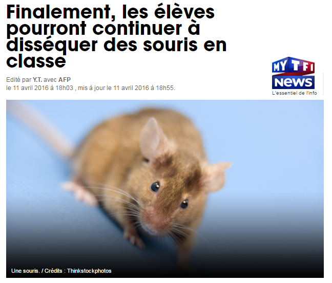 TF1 dissection souris