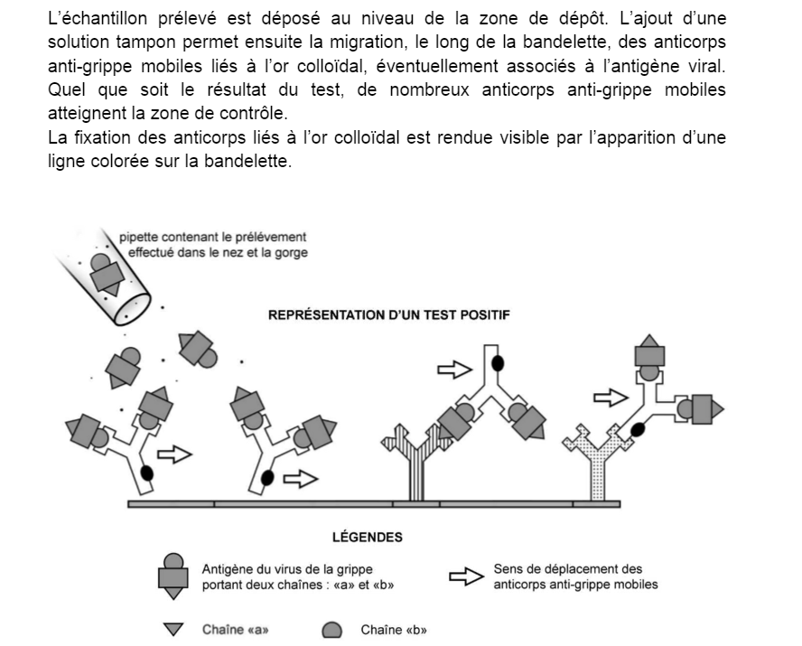 Virus antigène SVT pondichéry 2016 7