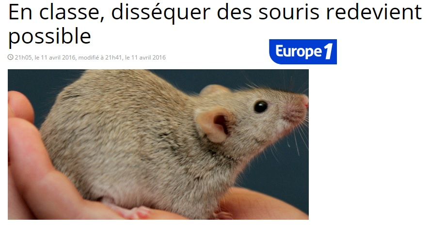 europe 1 dissection souris