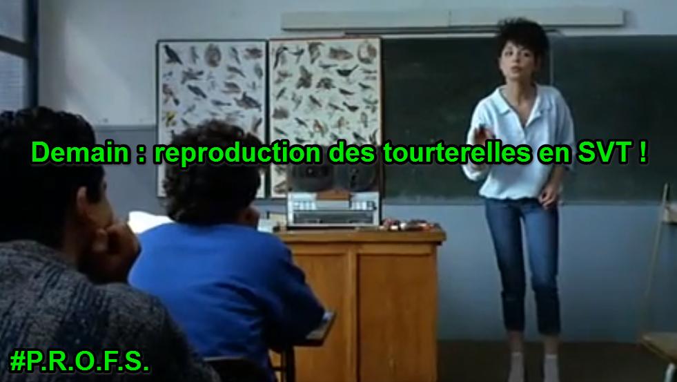 Reproduction des tourterelles en SVT