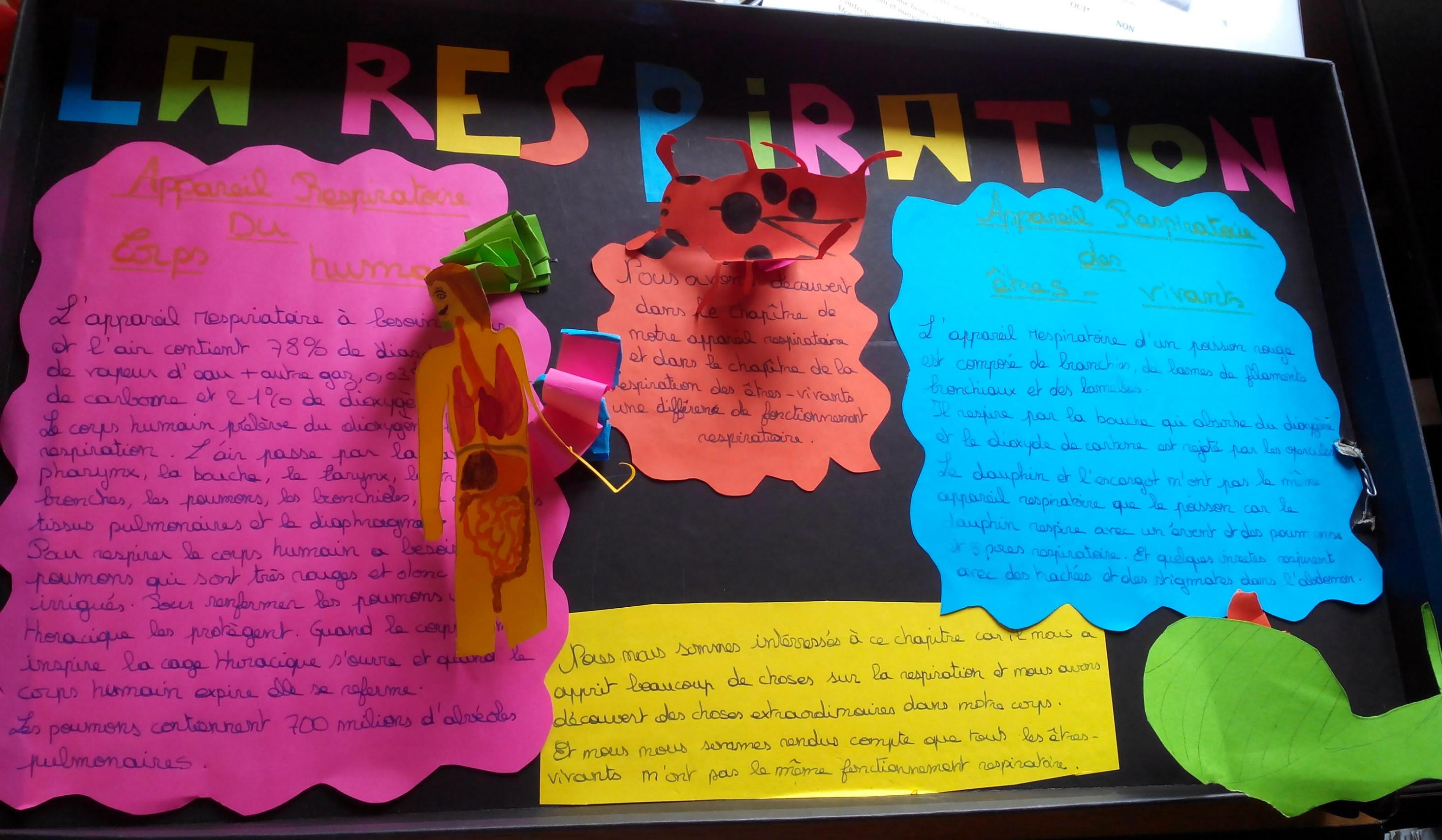 un an de SVT collège Assomption Rennes classe de 5ème (13)