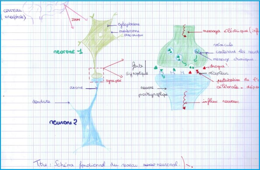 schéma-bilan-système-nerveux