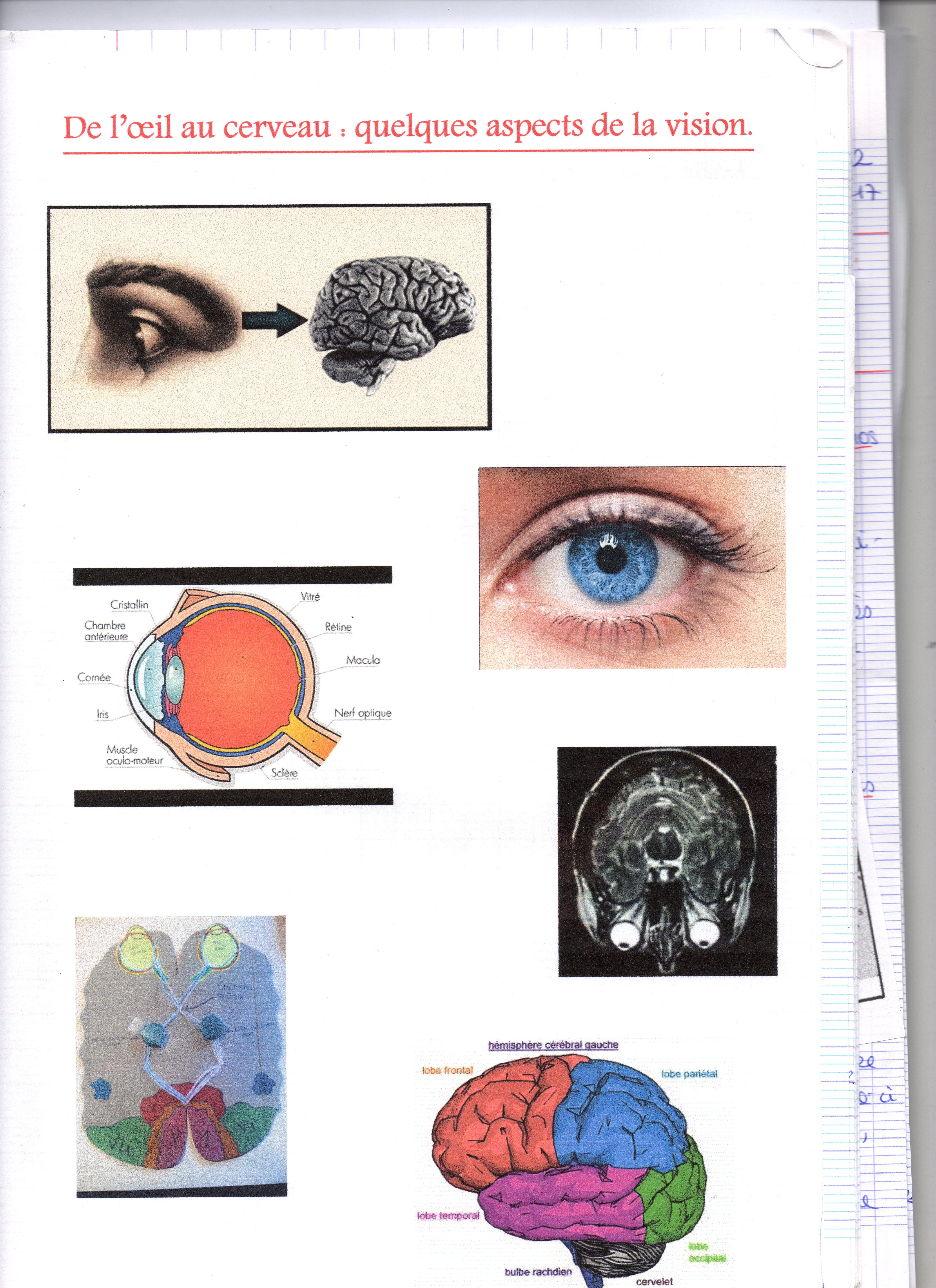 De L Oeil Au Cerveau Quelques Aspects De La Vision Svt