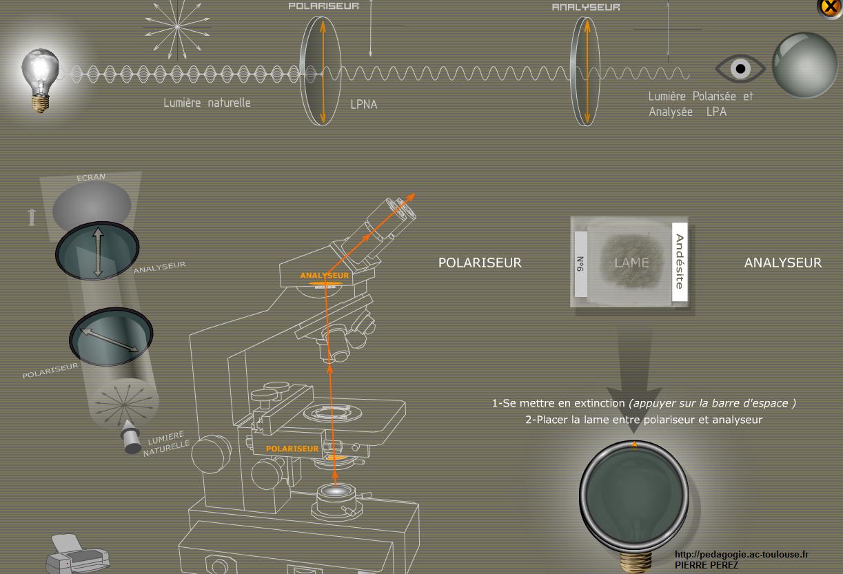 logiciel-pierre-perez-svt-microscope