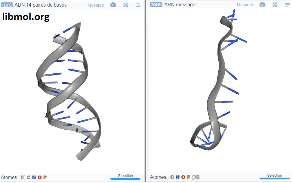 ADN ARN LibMol SVT