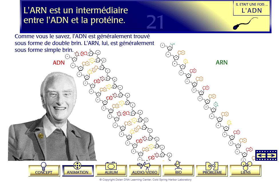 ARN ADN SVT 1ere S