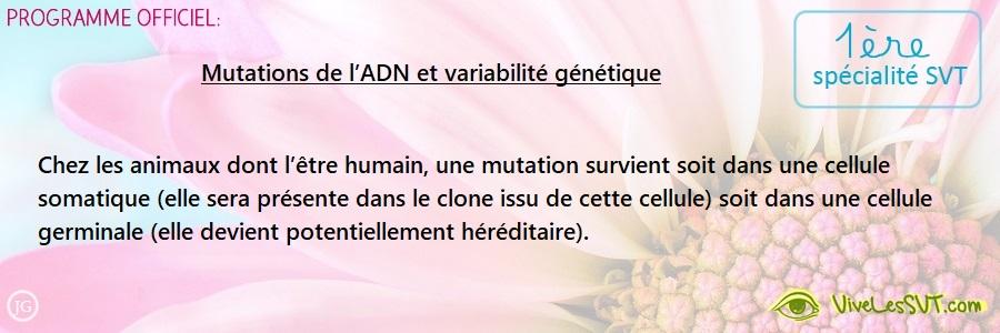 Les mutations de l'ADN et la variabilité génétique  – 1ère spé SVT