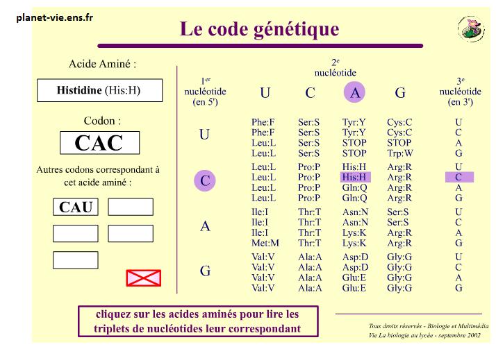 code génétique SVT 1ère S