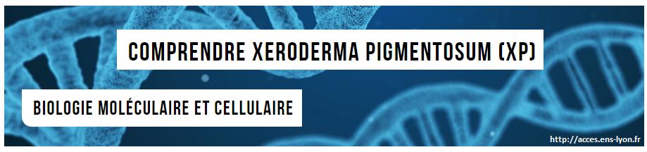 xeroderma pigmentosum svt 1ere s