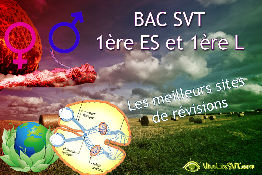 Bac Sciences 2017 1ère ES L révisions