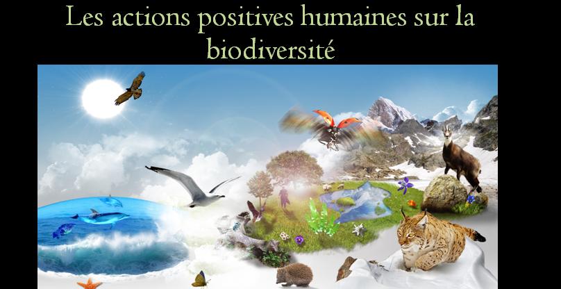 Les échelles de la biodiversité – SVT 2nde