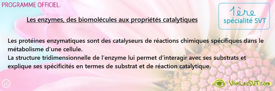 Les enzymes, des biomolécules aux propriétés catalytiques