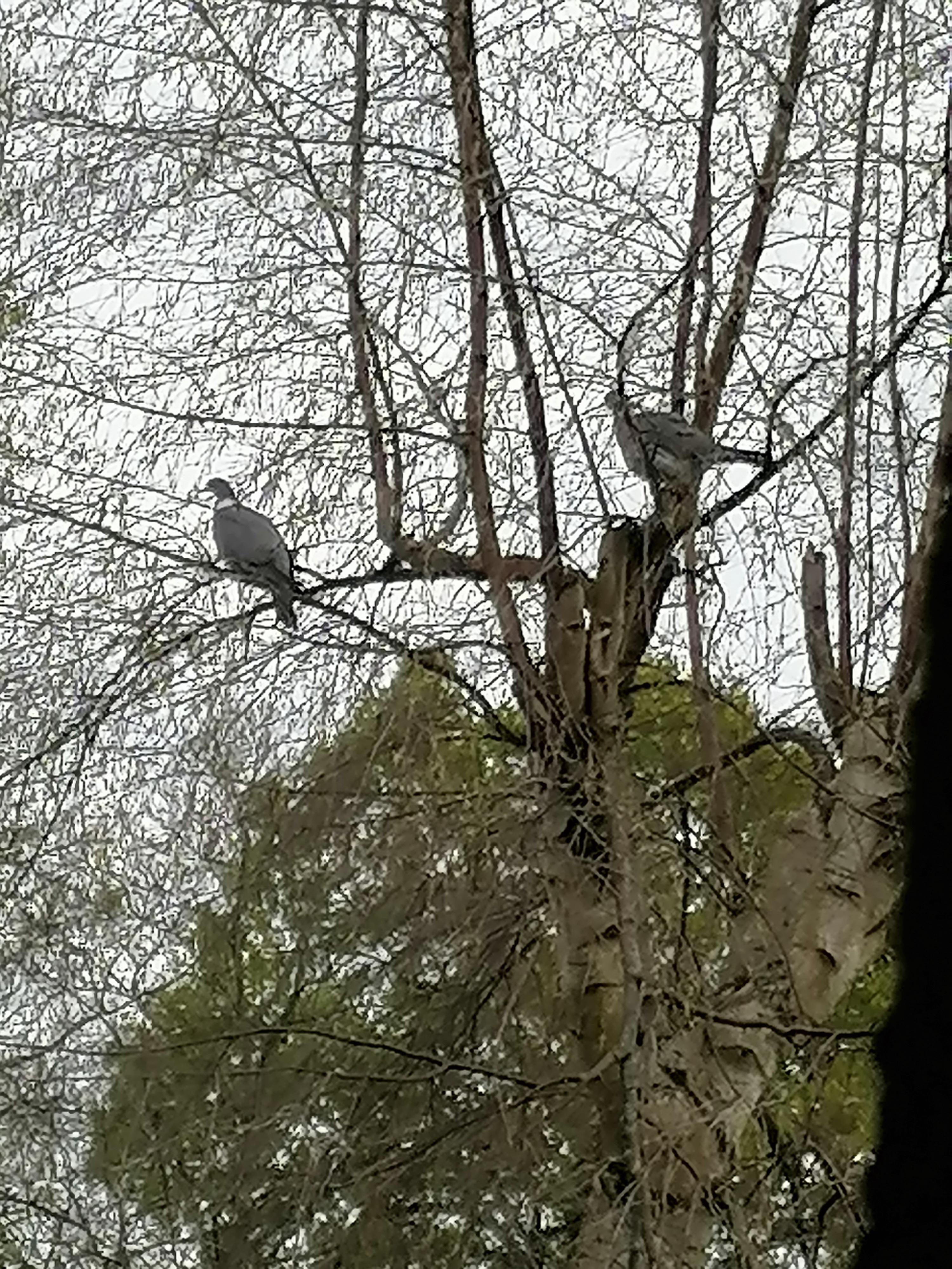 Observation des oiseaux durant le confinement