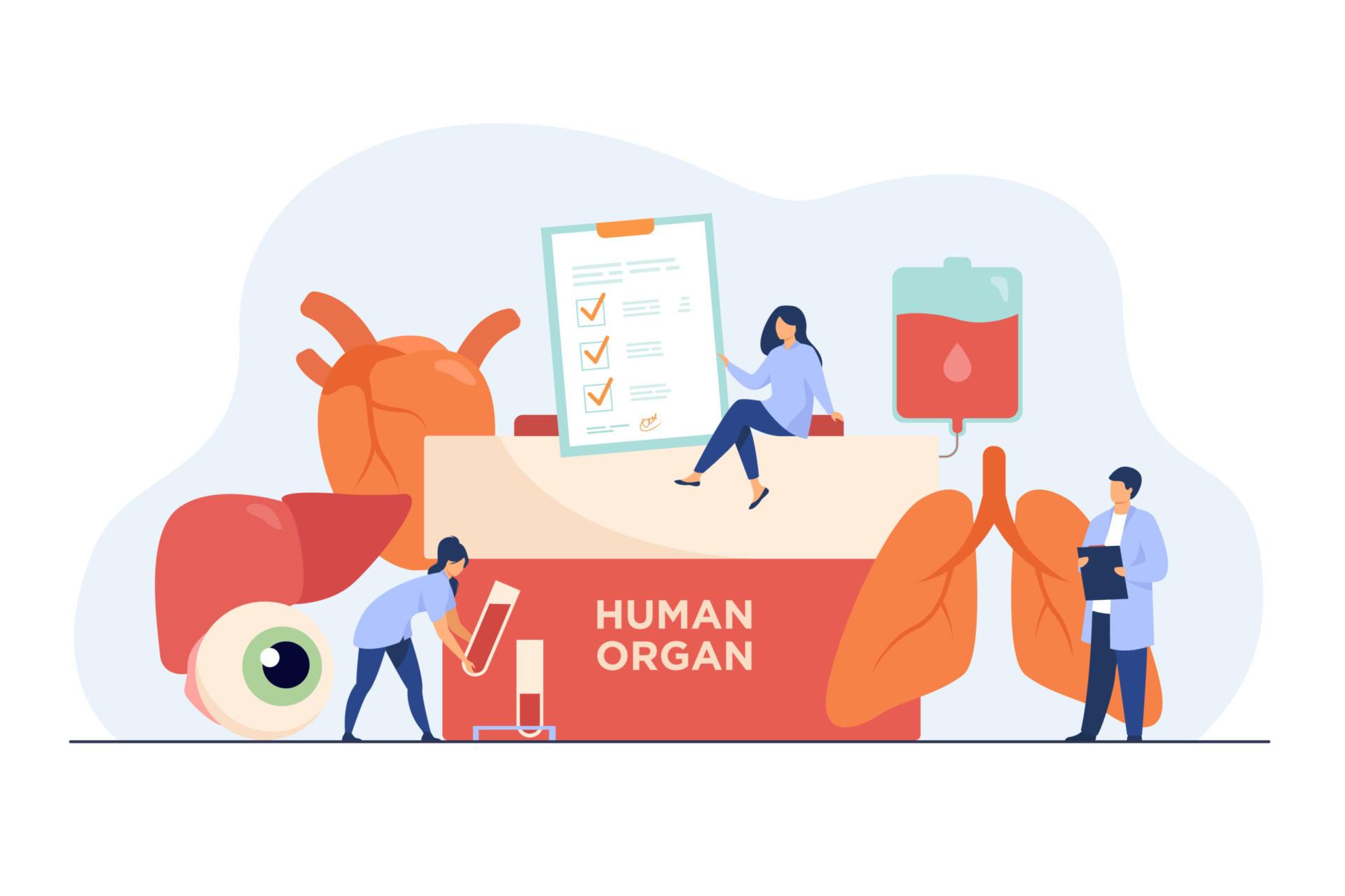 France Adot informe sur le don d'organes