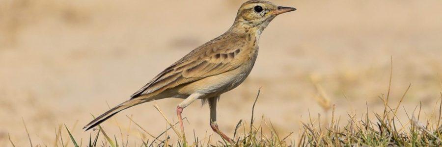 La population d'oiseaux diminue en France